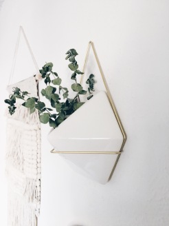 Wall Plant Hanging.